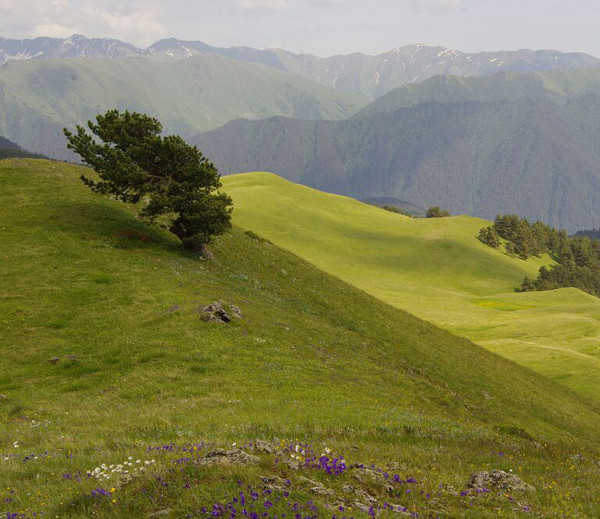 horse-tour-georgia